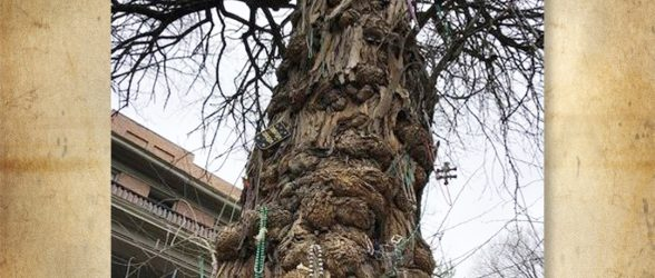 Witches, Demons, & Trees – Oh My!  Louisville's Storm Demon & the Witch Tree